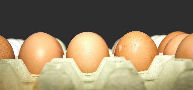 شماره سریال تخم مرغهای سمی در بلژیک