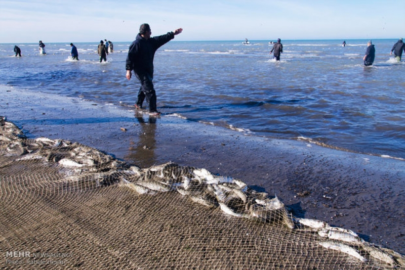 ماهیگیری در دریای خزر